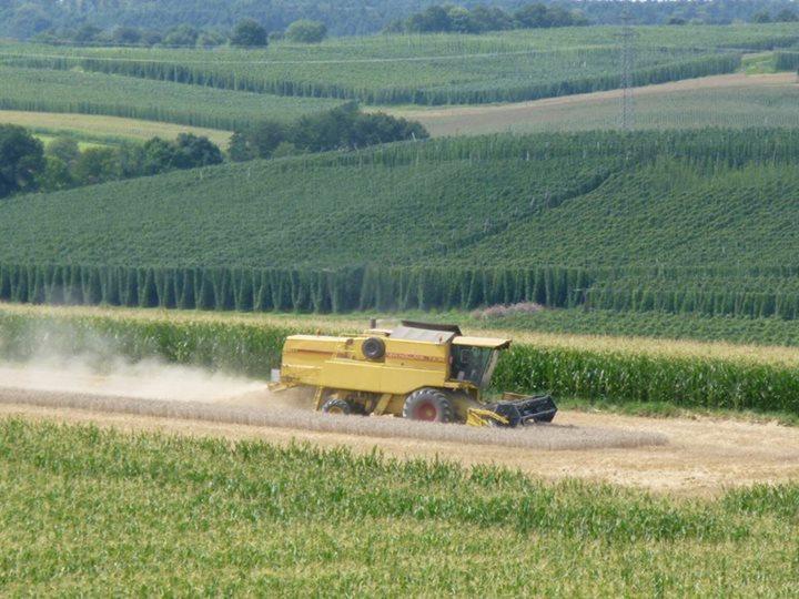 Getreide Ernte in der Hallertau