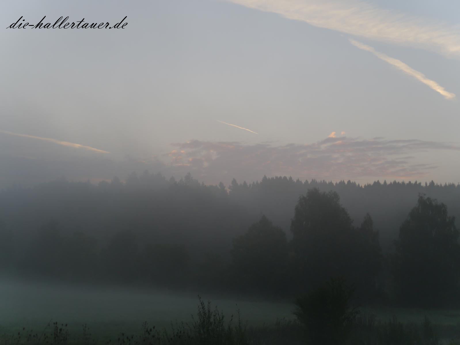 Hallertau in Nebel