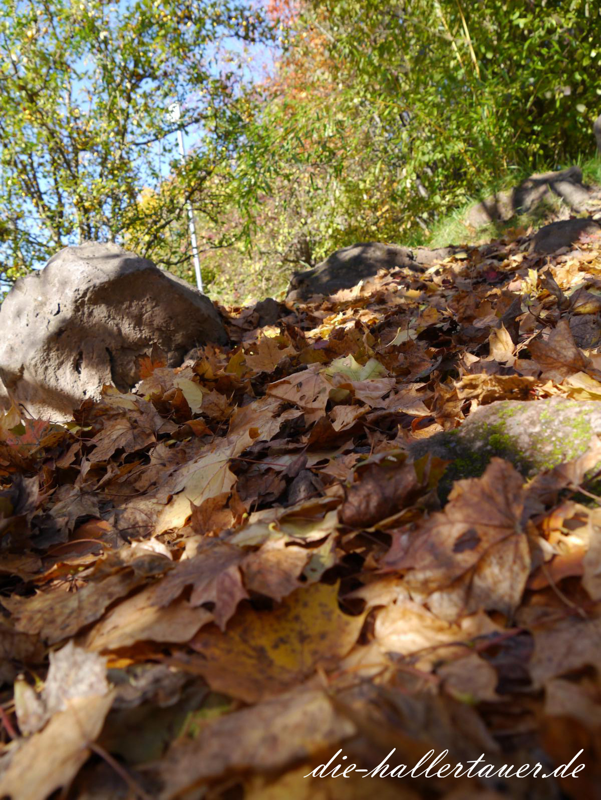 Herbstblätter in der Hallertau