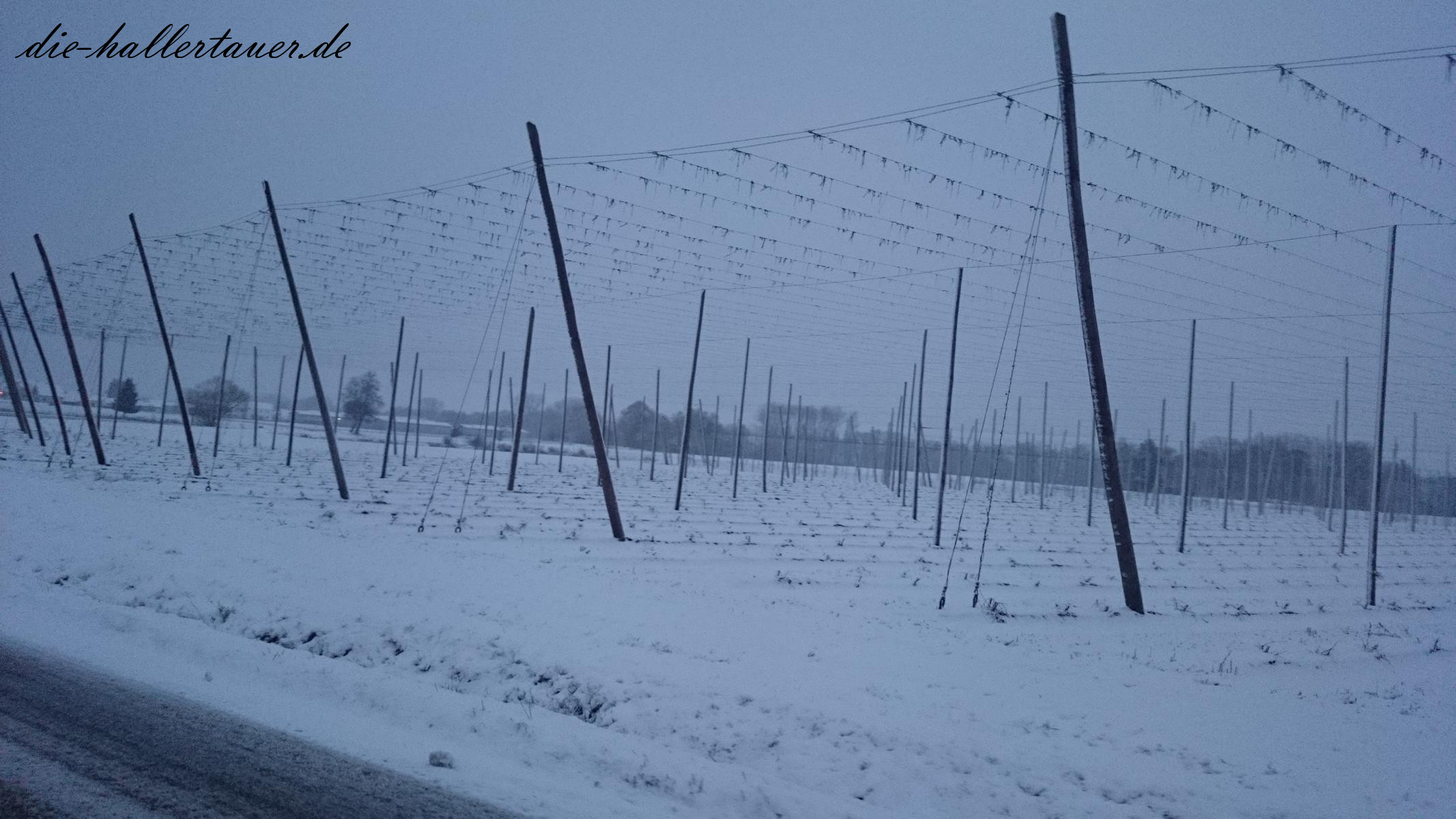 Winter Hopfengarten bei Geisenfeld