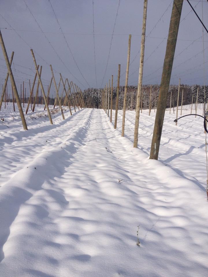 Osterwaal im Winter Teil 2