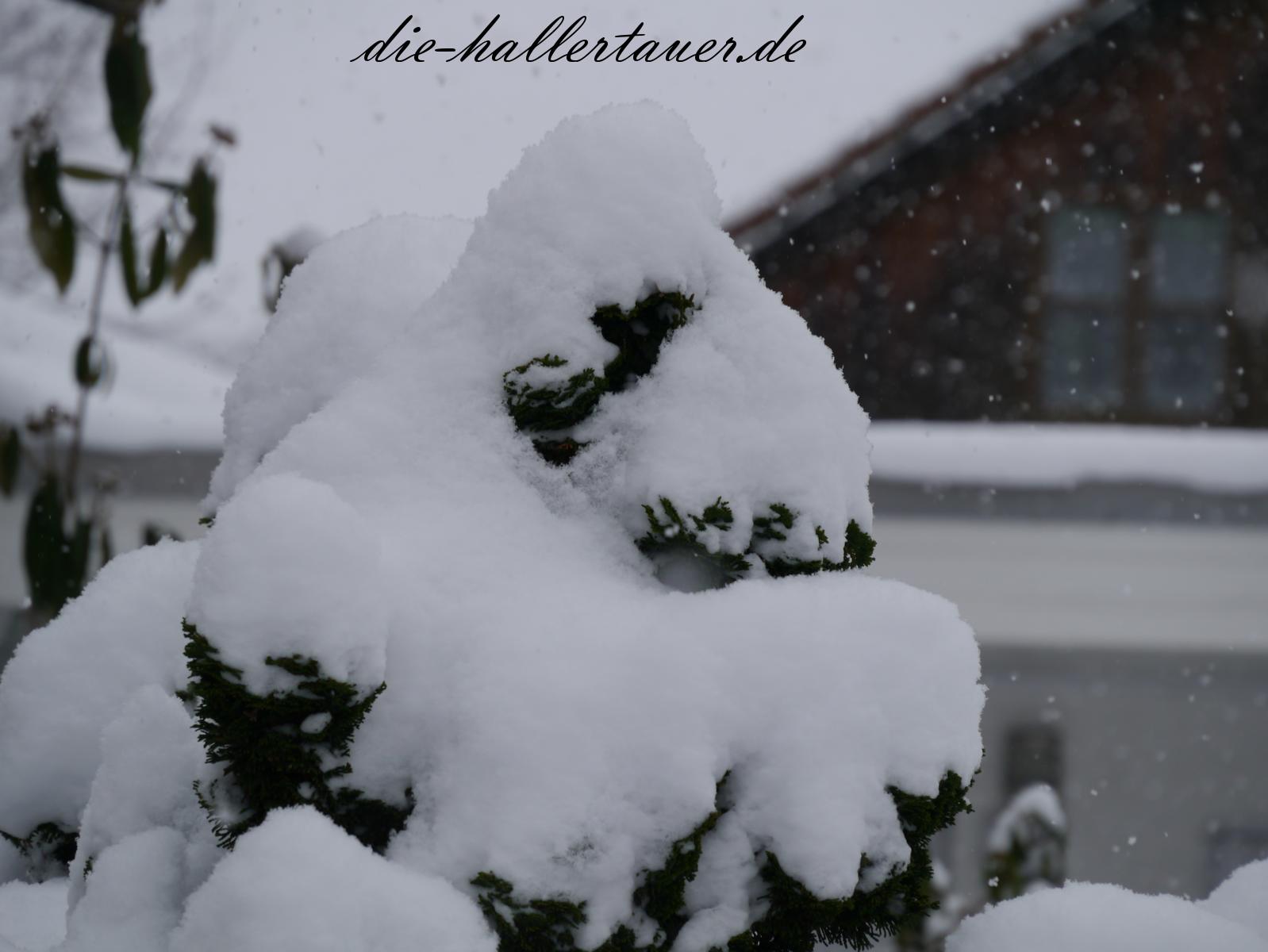 Schnee is schee