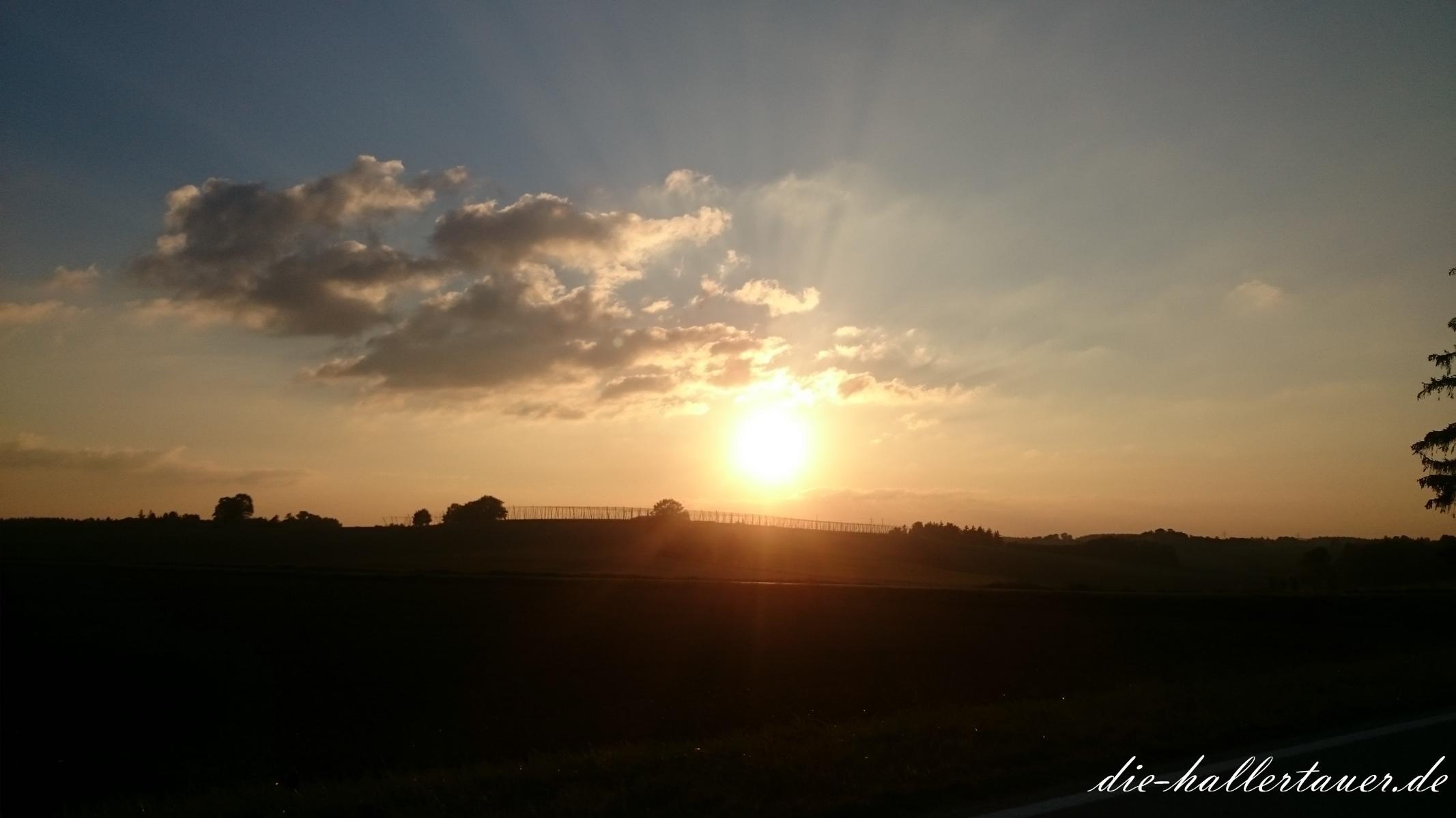 Sonne hinterm Hopfengarten