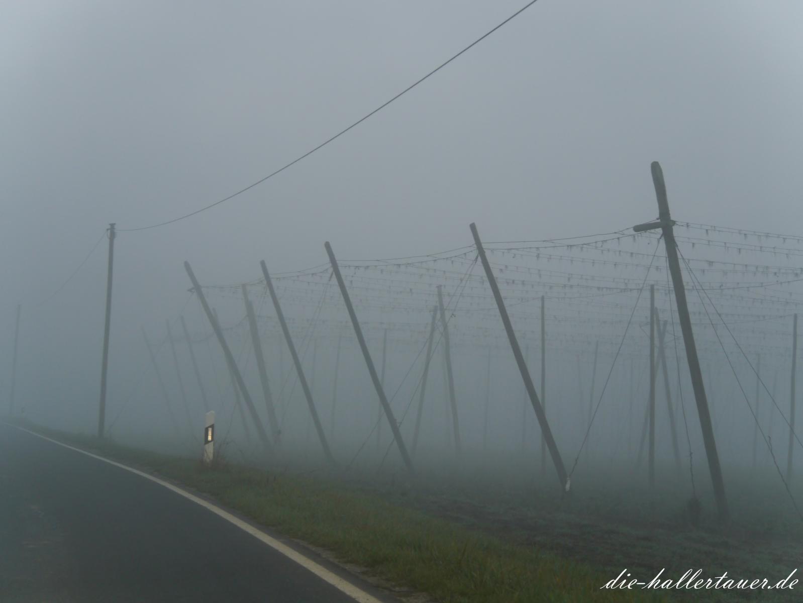 Nebel im Hopfengarten