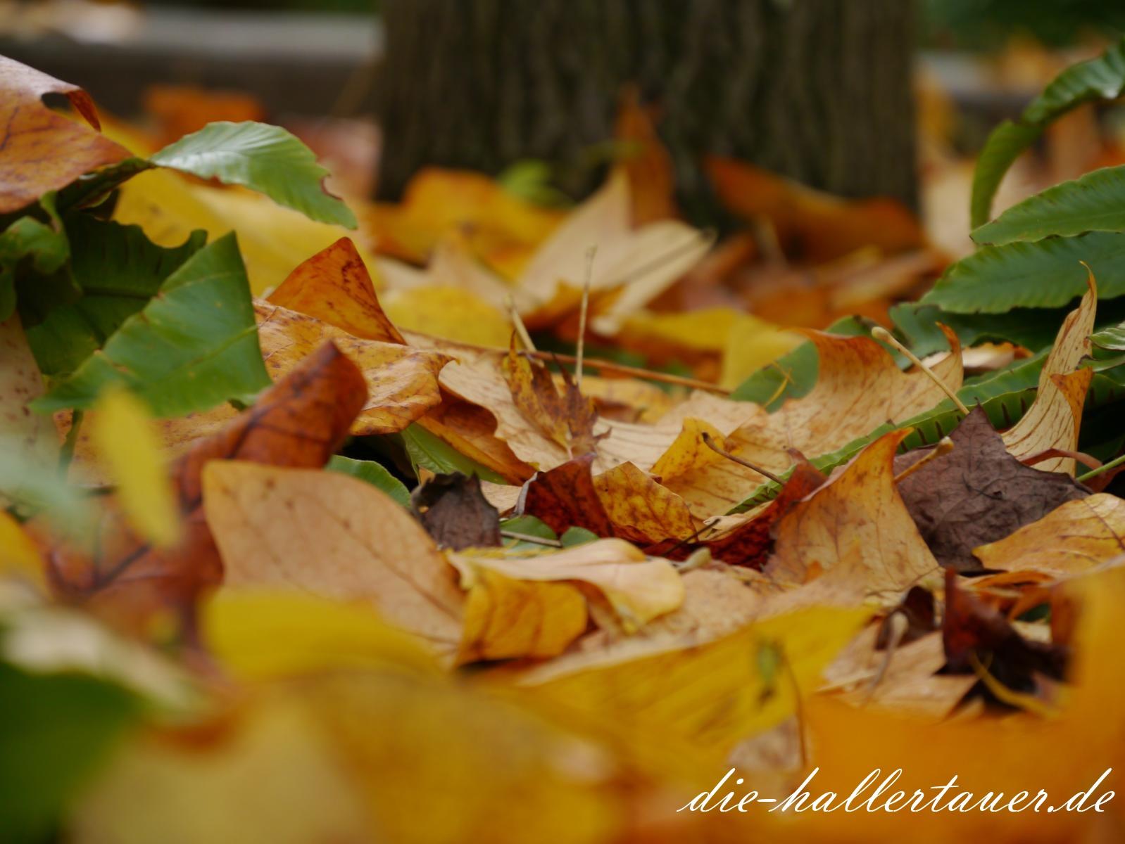 Hallertau Herbstblätter