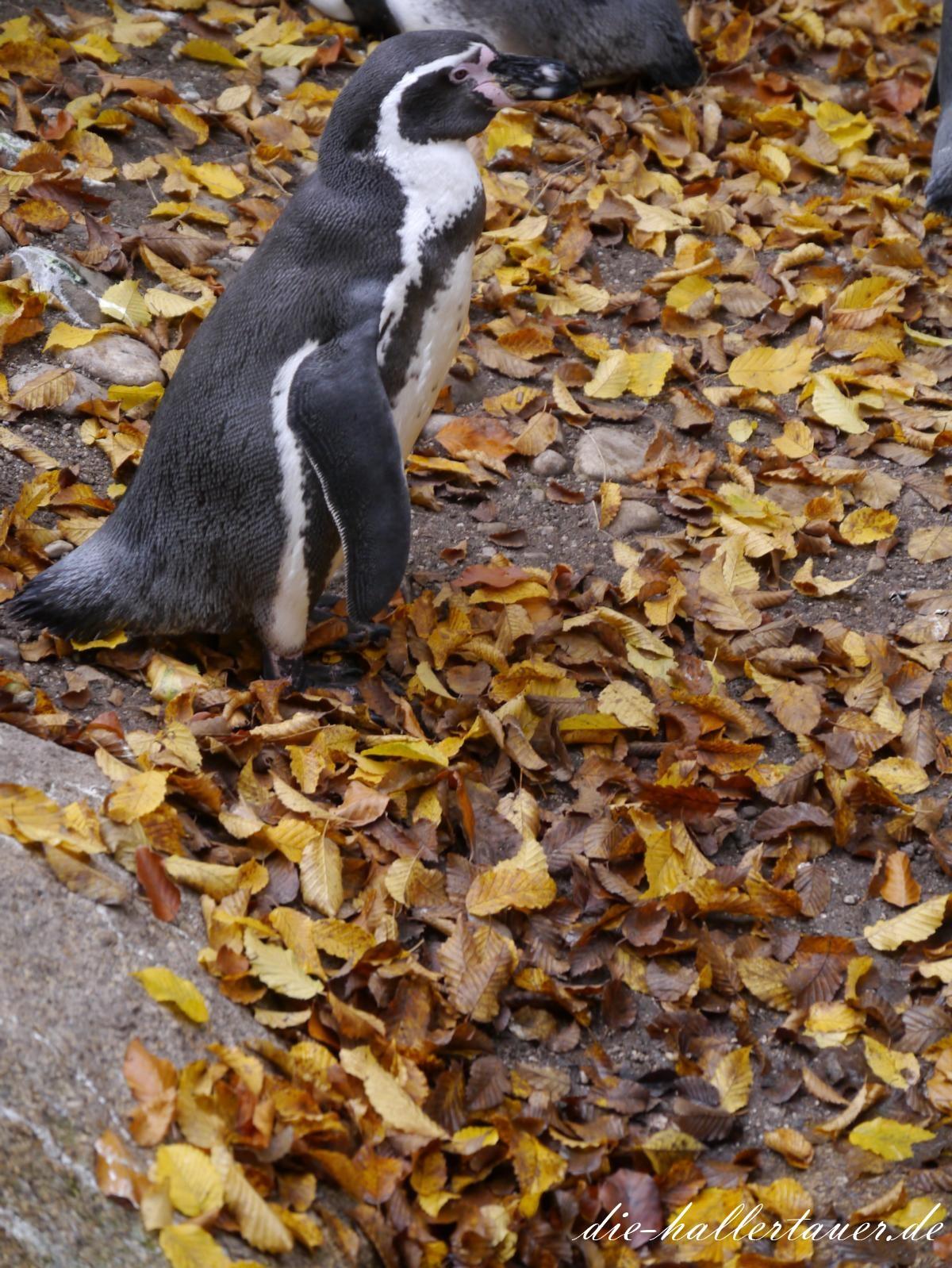 Hallertauer Pinguin