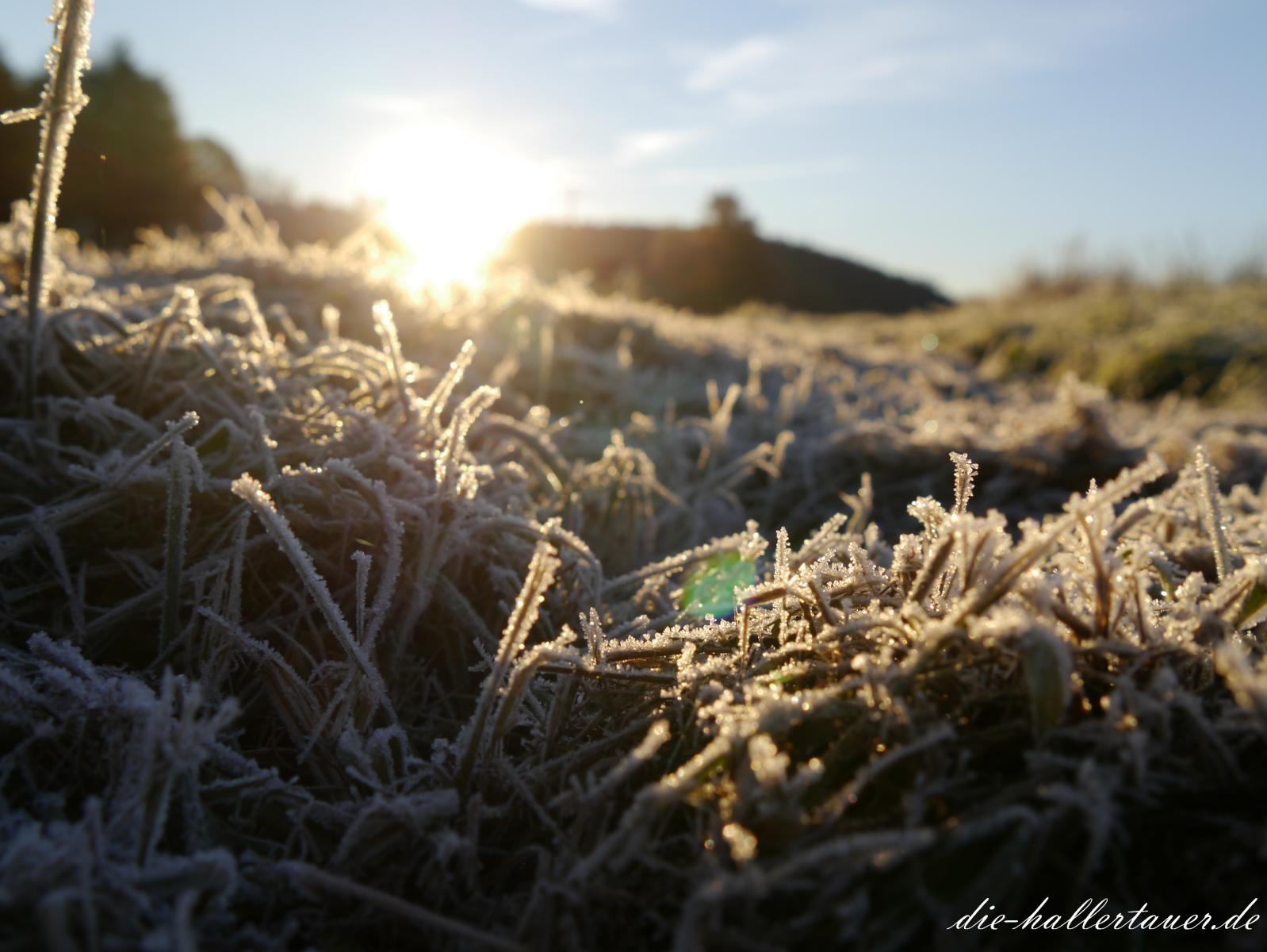 Frostige Sonne