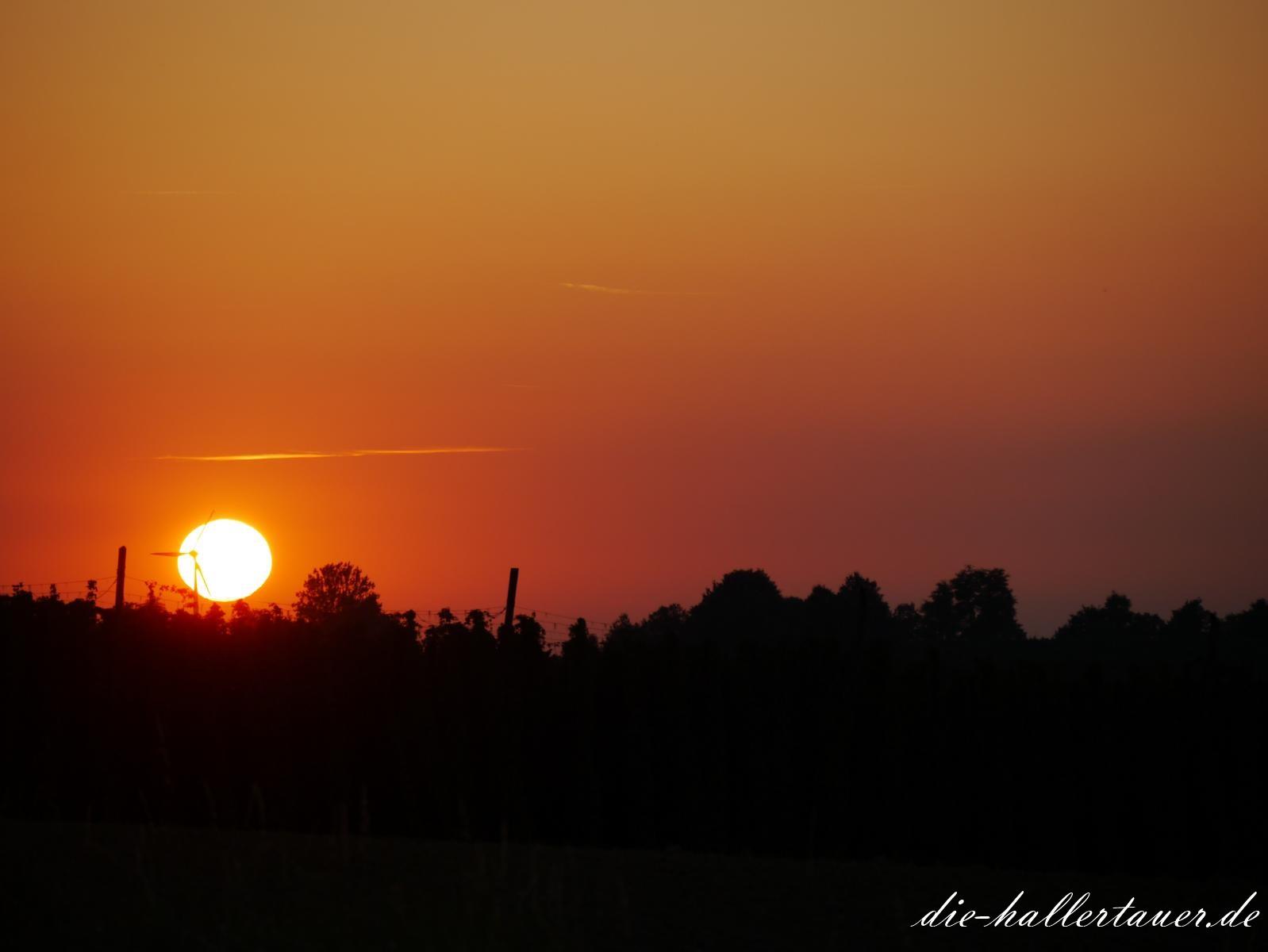 Hopfengarten Sonnenuntergang