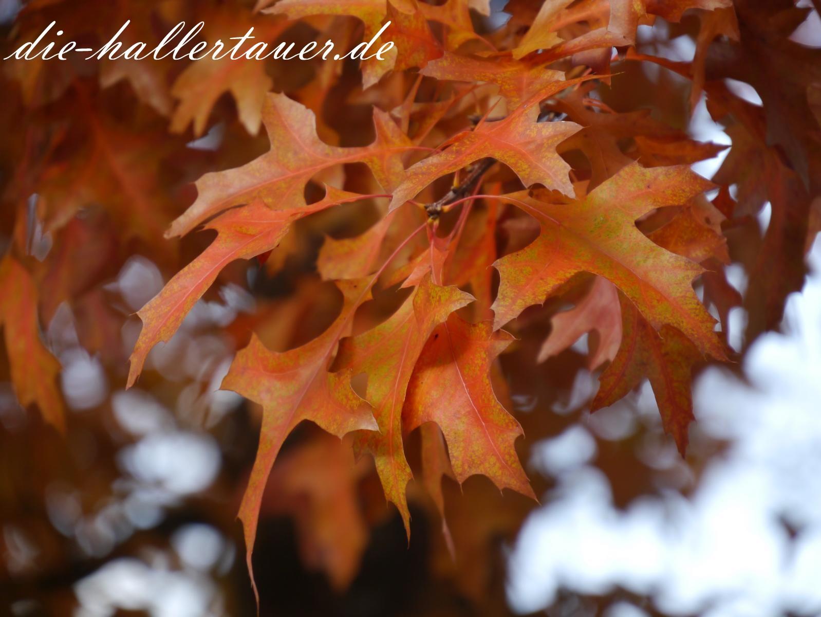 Herbst golden