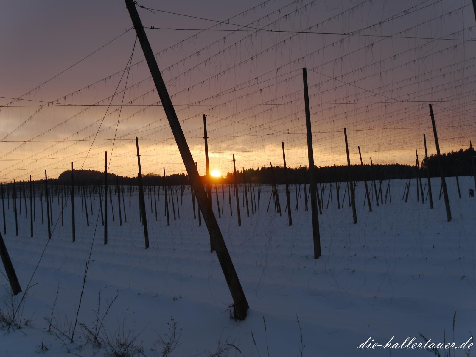Winterlichter Hallertauer Sonnenuntergang