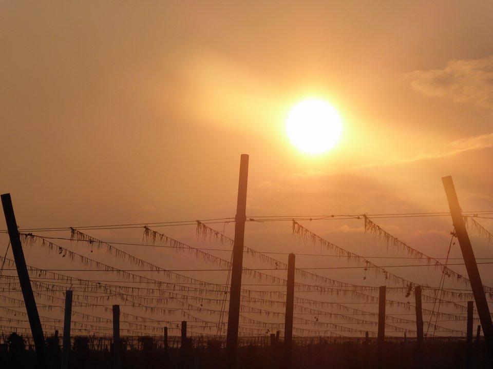 Holledauer Sonne